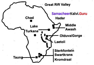 Evolution Of Human And Society Prehistoric Period Samacheer Kalvi 9th Social Science History Solutions Chapter 1