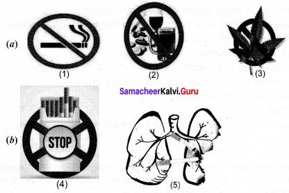 Samacheerkalvi.Guru Science 10th Solutions Chapter 21 Health And Diseases