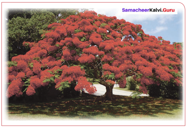 Samacheer Kalvi 6th English Solutions Term 1 Prose Chapter 2 When the Trees Walked 3