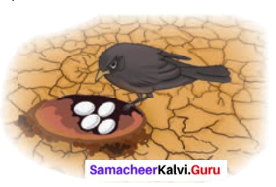 Who Owns The Water 6th Std Samacheer Kalvi Term 3 Prose Chapter 1