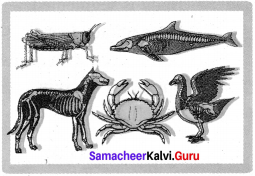 Samacheer Kalvi 7th Science Solutions Term 2 Chapter 5 Basis of Classification image - 3