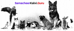 The Cat And The Painkiller Summary Samacheer Kalvi 9th English Solutions Supplementary Chapter 4