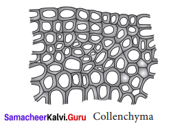 Organisation Of Tissues Class 9 Samacheer Kalvi 9th Science Solutions