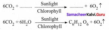 Plant Physiology Class 9 Samacheer Kalvi Chapter 19 Plant Physiology