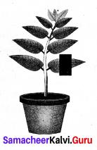 Chapter 19 Plant Physiology Samacheer Kalvi 9th Science