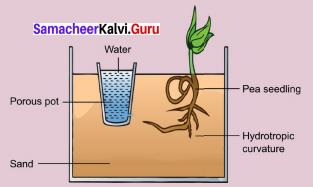 9th Science Plant Physiology Samacheer Kalvi Chapter 19