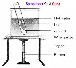Plant Physiology Class 9 Book Back Answers Samacheer Kalvi Chapter 19