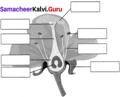 Reproduction And Modification In Plants Samacheer Kalvi 7th Science Solutions Term 1 Chapter 5