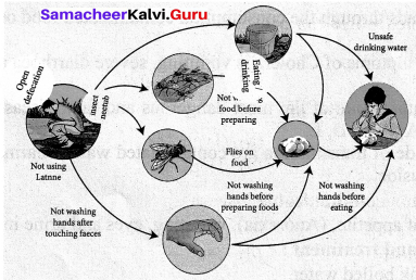 Health And Hygiene Class 7 Samacheer Kalvi Term 1 Chapter 6