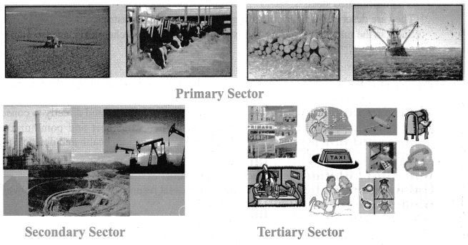 Samacheer Kalvi Guru 7th Social Science Economics Solutions Term 1 Chapter 1 Production