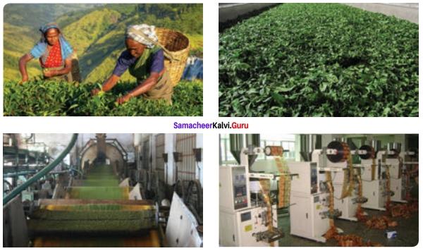 12th English A Nice Cup Of Tea Solutions Prose Chapter 2 Samacheer Kalvi