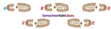 Samacheer Kalvi 7th Maths Solutions Term 3 Chapter 4 Geometry Ex 4.1 18