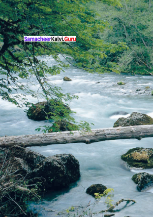 The River Poem Questions And Answers Samacheer Kalvi 9th English Chapter 5