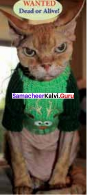 11th English Guide Solutions Poem Chapter 4 Macavity - The Mystery Cat Samacheer Kalvi