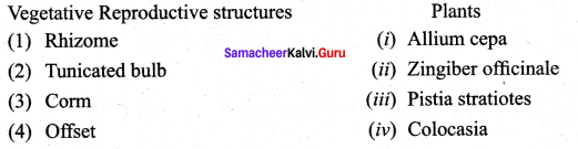 12th Bio Botany Chapter 1 Asexual And Sexual Reproduction In Plants Samacheer Kalvi