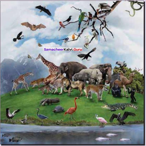 Zoology 11th Class First Chapter The Living World Samacheer Kalvi