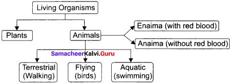 11th Zoology 1st Chapter The Living World Samacheer Kalvi