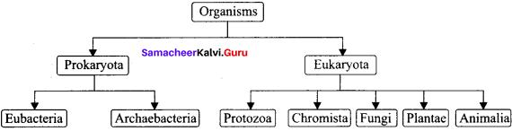 Samacheer Kalvi 11 Zoology Solutions Chapter 1 The Living World
