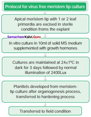 Samacheer Kalvi 12th Bio Botany Solutions Chapter 5 Plant Tissue Culture