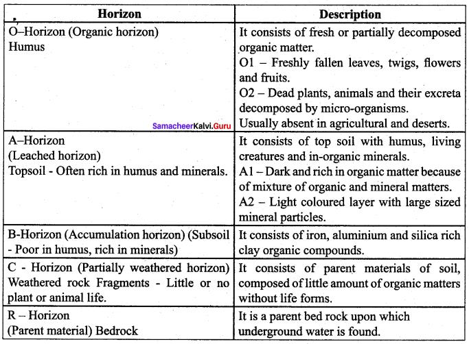 Samacheer Kalvi 12th Botany Solutions Chapter 6 Principles Of Ecology