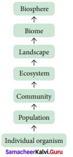 12th Bio Botany Samacheer Kalvi Solutions Chapter 6 Principles Of Ecology