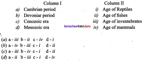 Samacheer Kalvi 12th Bio Zoology Solutions Chapter 6 Evolution