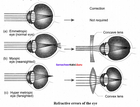 Tamil Nadu 11th Biology Model Question Paper 3 English Medium - 11