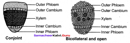 Tamil Nadu 11th Biology Previous Year Question Paper June 2019 English Medium - 4