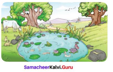 The World Of Animals Class 6 Science Solutions Term 1 Chapter 5 Samacheer Kalvi