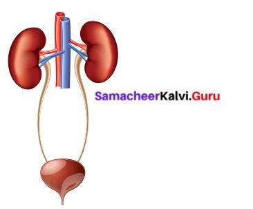 Human Organ System Class 6 Samacheer Kalvi Science Solutions Term 2 Chapter 6