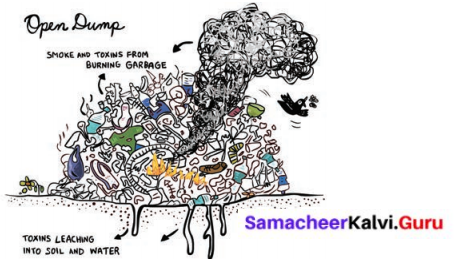 Samacheer Kalvi 6th Science Solutions Term 3 Chapter 4 Our Environment 1