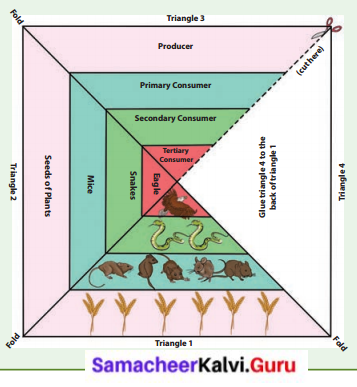 Samacheer Kalvi 6th Science Solutions Term 3 Chapter 4 Our Environment 4