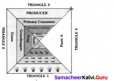 Samacheer Kalvi 6th Science Solutions Term 3 Chapter 4 Our Environment 5