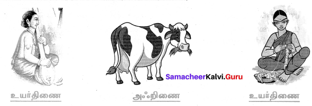 Samacheer Kalvi 7th Tamil Solutions Term 1 Chapter 1.5 குற்றியலுகரம், குற்றியலிகரம் - 6