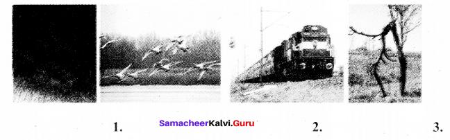Samacheer Kalvi 7th Tamil Solutions Term 3 Chapter 3.5 ஆகுபெயர் - 9