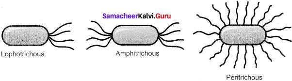 Samacheer Kalvi 11th Botany Solutions Chapter 1 Living World
