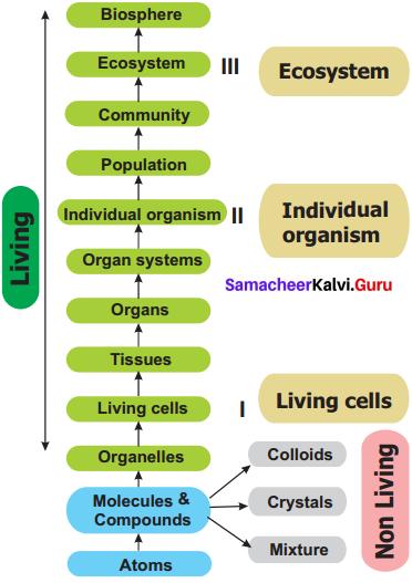 11th Bio Botany Samacheer Kalvi Solutions Chapter 1 Living World