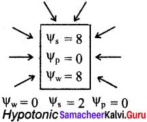 Samacheer Kalvi 11th Bio Botany Solutions Chapter 11 Transport in Plants 1