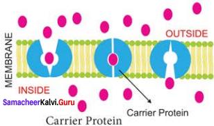 Samacheer Kalvi 11th Bio Botany Solutions Chapter 11 Transport in Plants 3