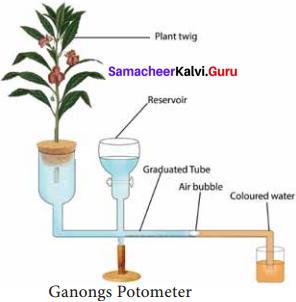 Samacheer Kalvi 11th Bio Botany Solutions Chapter 11 Transport in Plants 8