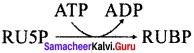 Samacheer Kalvi 11th Bio Botany Solutions Chapter 13 Photosynthesis 1