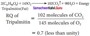 Samacheer Kalvi 11th Bio Botany Solutions Chapter 14 Respiration 10