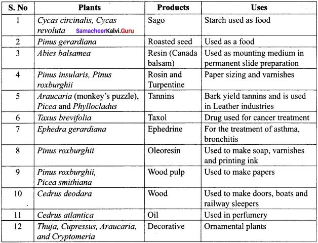 Samacheer Kalvi 11th Bio Botany Solutions Chapter 2 Plant Kingdom 13
