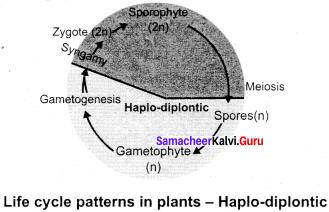 Samacheer Kalvi 11th Botany Book Solutions Chapter 2 Plant Kingdom