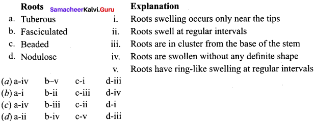 Samacheer Kalvi 11th Bio Botany Solutions Chapter 3 Vegetative Morphology 1