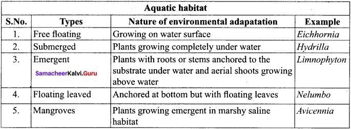 Samacheer Kalvi 11th Bio Botany Solutions Chapter 3 Vegetative Morphology 17