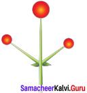 Samacheer Kalvi 11th Bio Botany Solutions Chapter 4 Reproductive Morphology 5