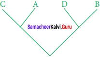 Samacheer Kalvi 11th Bio Botany Solutions Chapter 5 Taxonomy and Systematic Botany 1