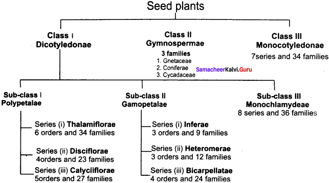 Samacheer Kalvi 11th Bio Botany Solutions Chapter 5 Taxonomy and Systematic Botany 18