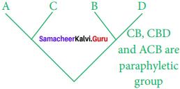Samacheer Kalvi 11th Bio Botany Solutions Chapter 5 Taxonomy and Systematic Botany 2